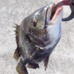 春の西宮ケーソン、エビ撒き釣りでチヌ釣り