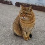 旧水上警察でネコに見守られながら魚にエサをあげてきた
