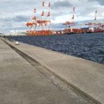 秋のポートアイランド沖堤防で呑ませ釣り釣行記